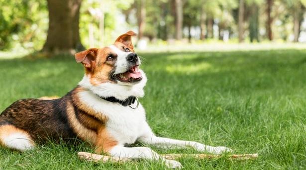 בחירת פנסיון לכלבים